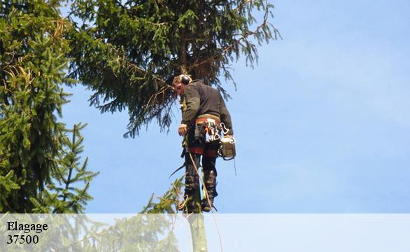 Elagage d 39 arbres couziers for Paysagiste 37