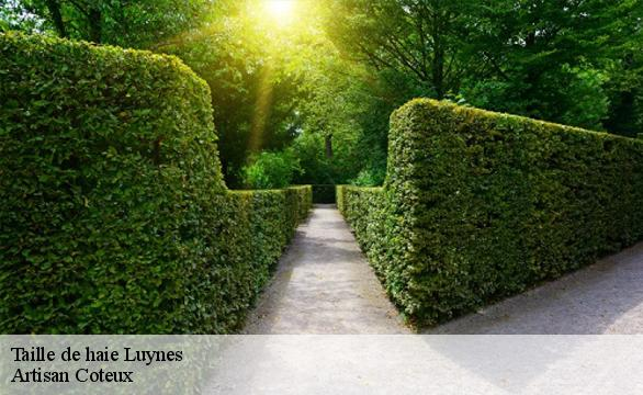 Taille de haie  luynes-37230