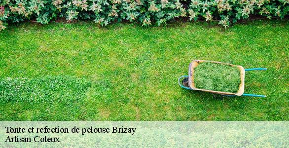 Tonte et refection de pelouse  brizay-37220 Artisan Coteux