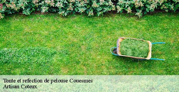 Tonte et refection de pelouse  couesmes-37330 Artisan Coteux