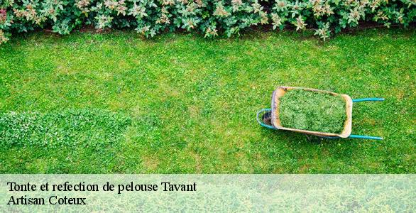 Tonte et refection de pelouse  tavant-37220 Artisan Coteux